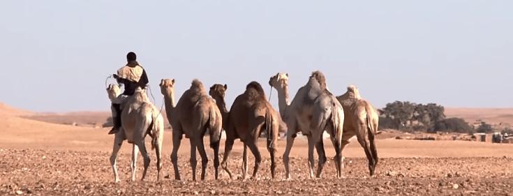 República Árabe Saharaui Democrática