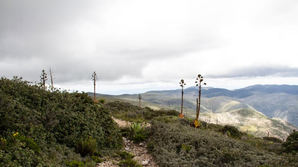La película fue filmada en Jalisco dentro de la Comunidad Huichol de San Andrés Cohamiata, San Luis Potosí (Desierto de Wirikuta) y en la Ciudad de México.